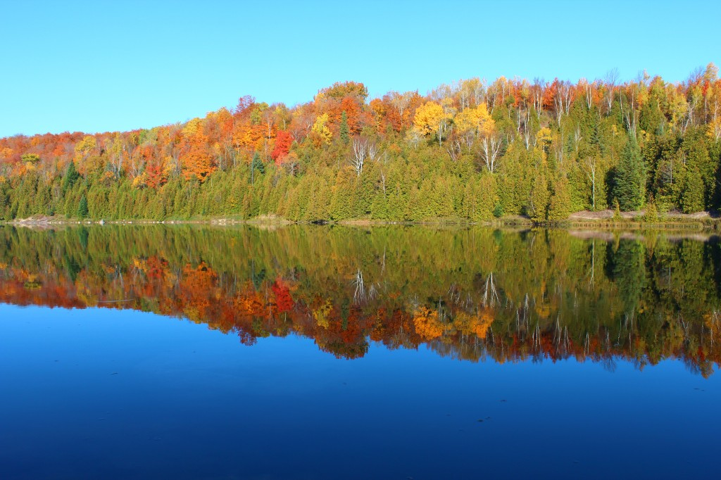 pine river ontario autumn leaves metro photo challenge